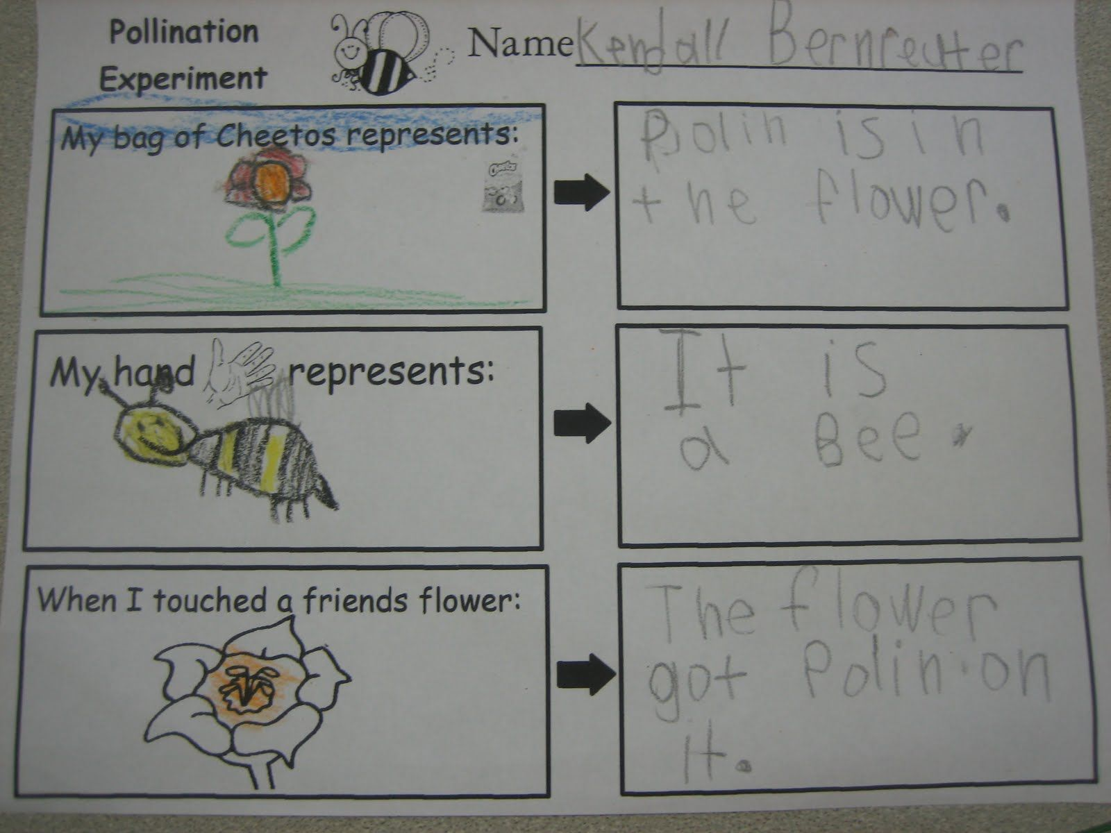 How Orange Cheeto Hands Can Help You Learn About Pollination Great Activity