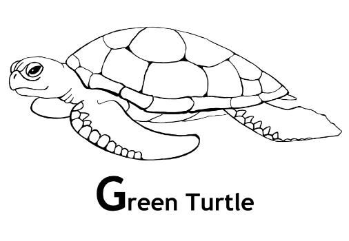 sea turtles turtles and print coloring pages on pinterest