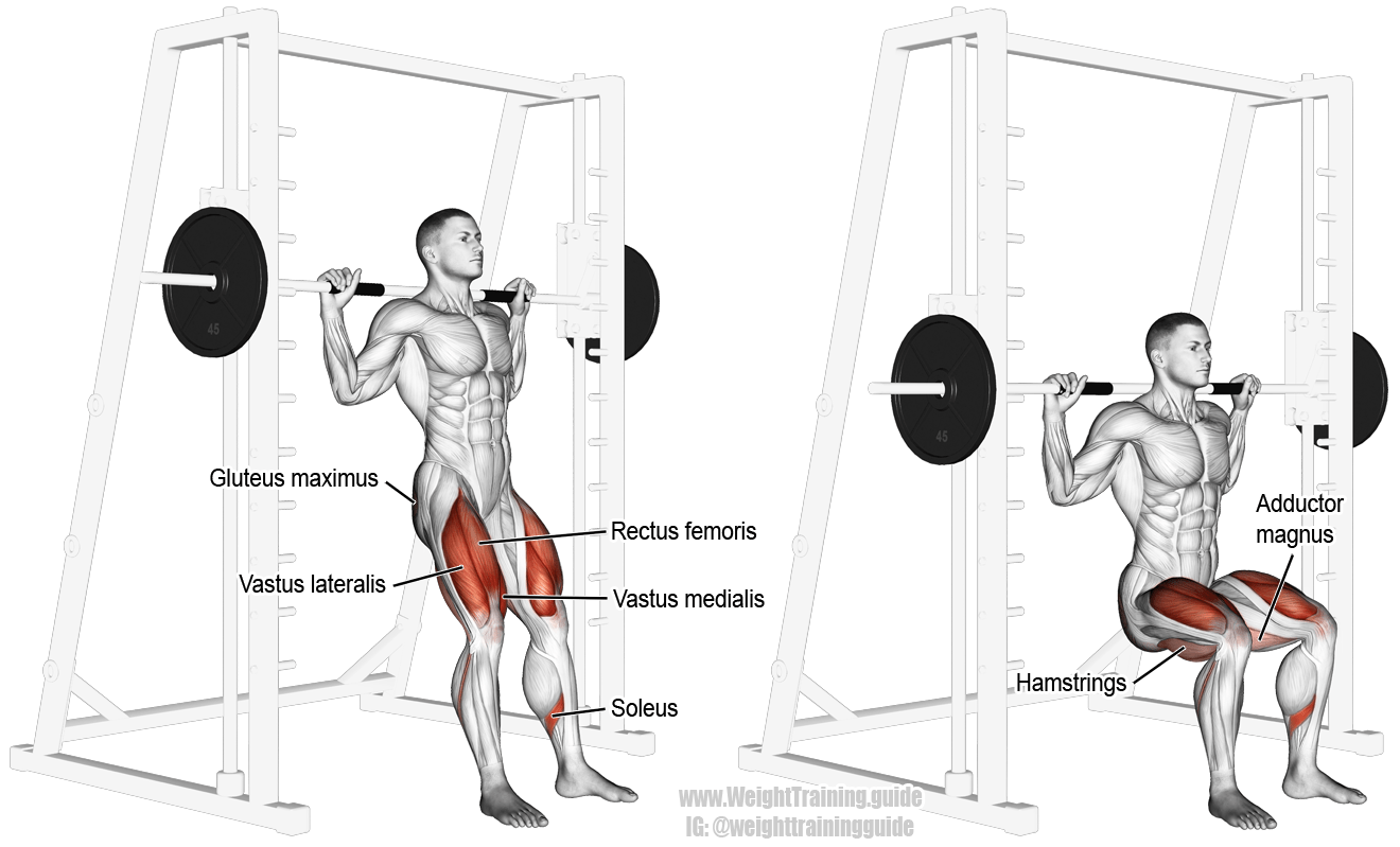 Smith Chair Squat A Compound Exercise Target Muscle