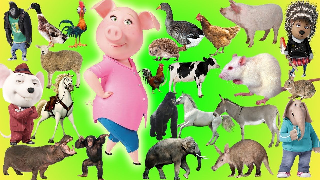 Animals Farm Name and Sounds SING Animals Cartoon in