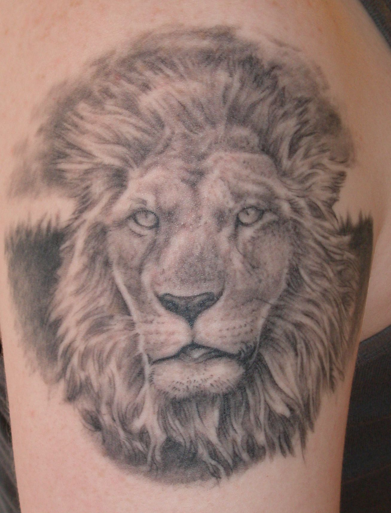 Lion Chest Tattoo for Pinterest Lion Tattoo Designs On
