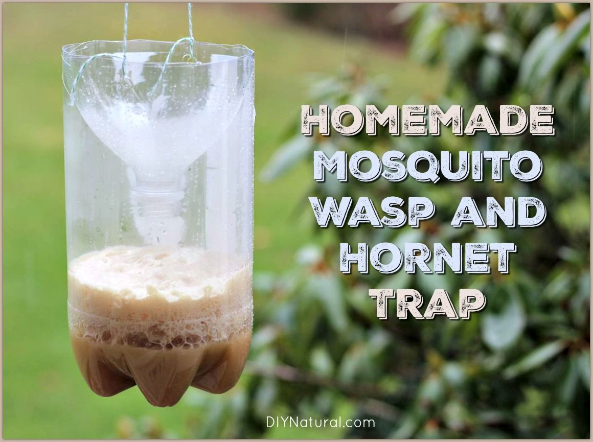 Homemade Mosquito Traps and Homemade Wasp Traps Wasp