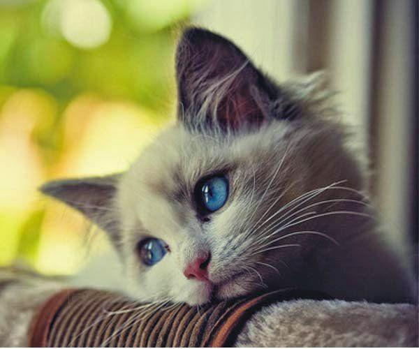 猫 悲しみ에 대한 이미지 검색결과