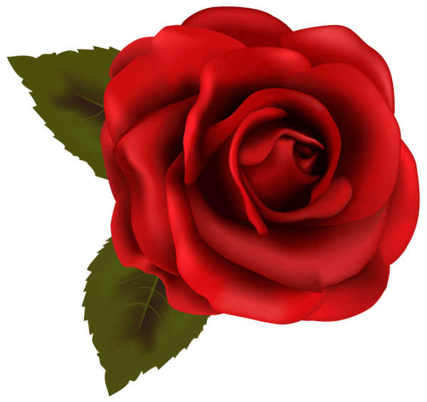 Beautiful Red Rose Transparent PNG Clip Art Image Roses