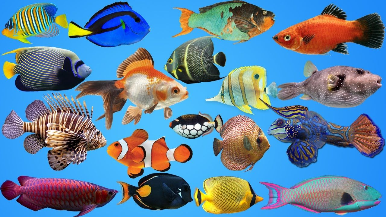 Fish for kids + Sea Animals Water Pet for kids Kids at