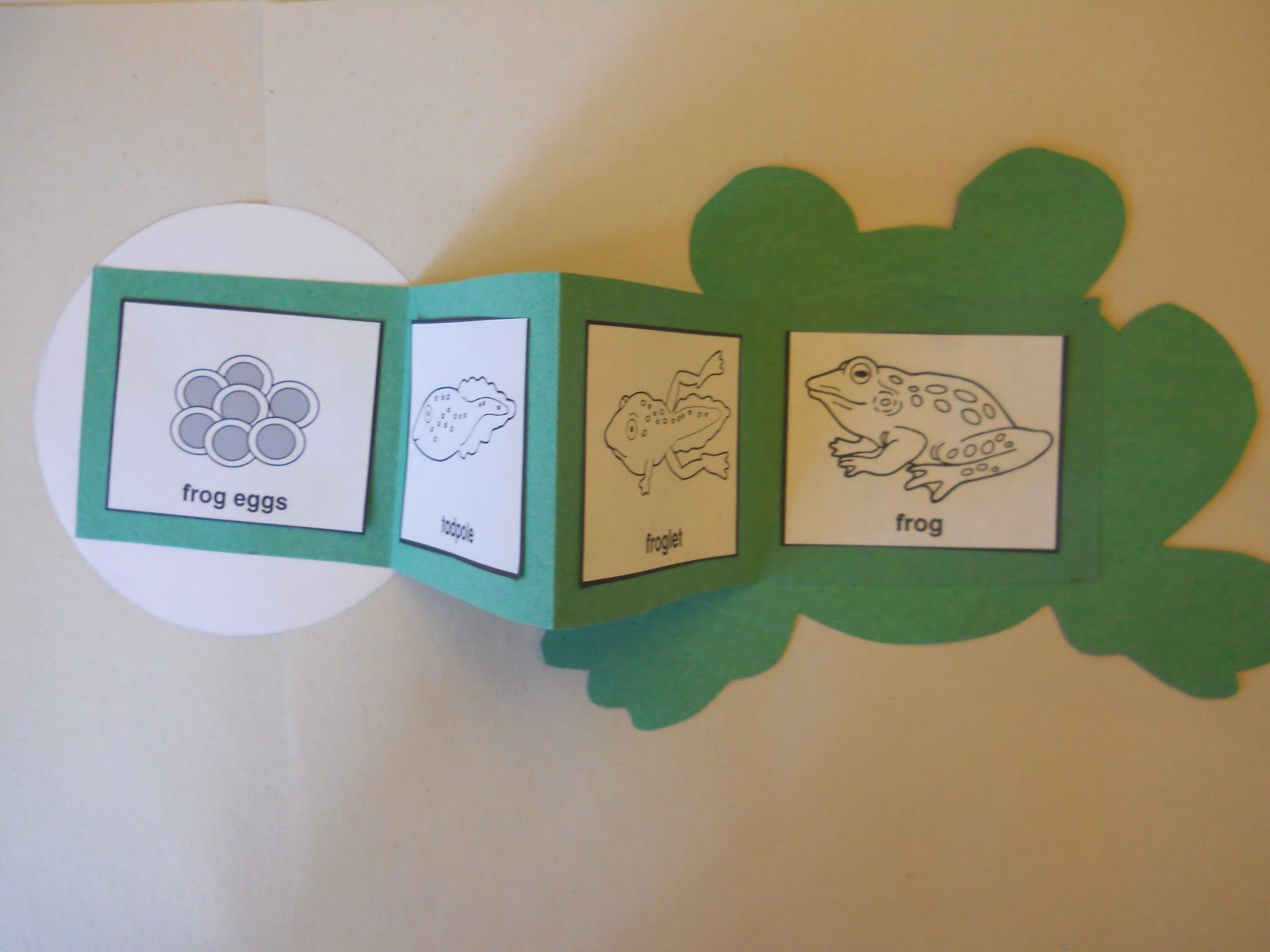 Life Cycle Of A Frog Adapt With Butterfly Unit