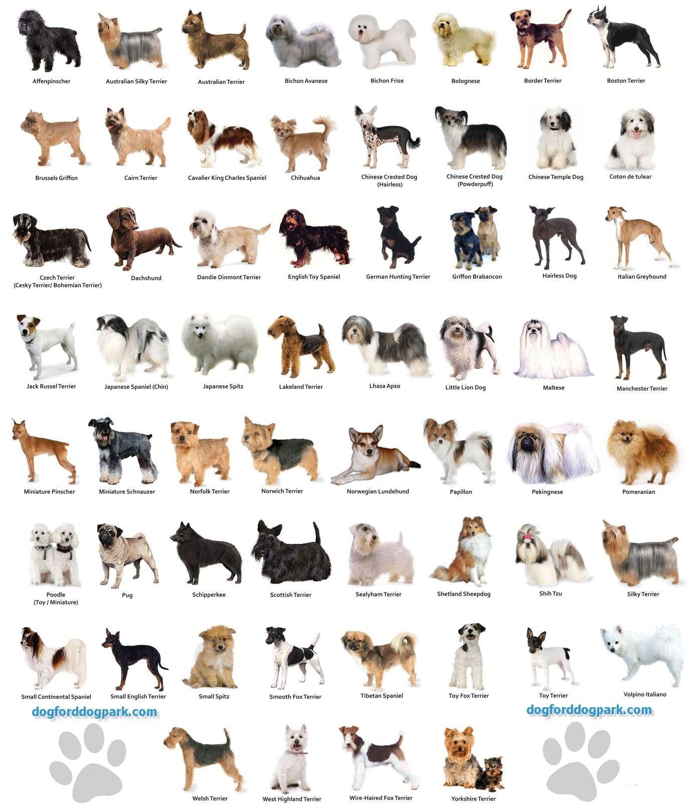 Small Dog Breeds Chart Jaddid HD Wallpapers