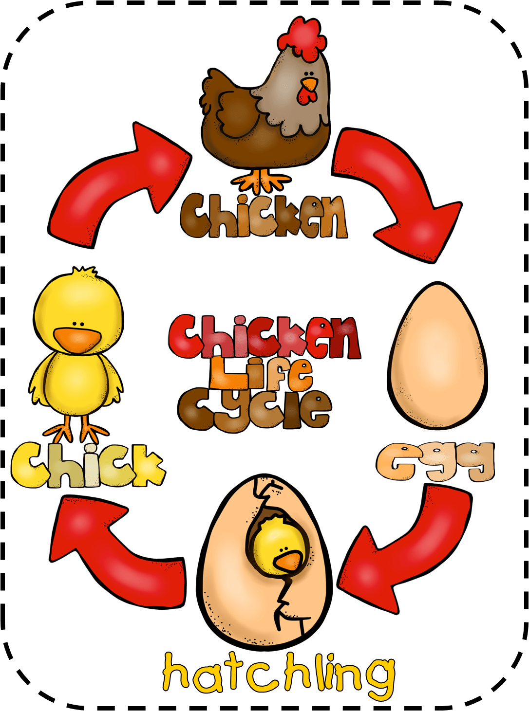 Chicken Life Cycle Free From First Grade Wow