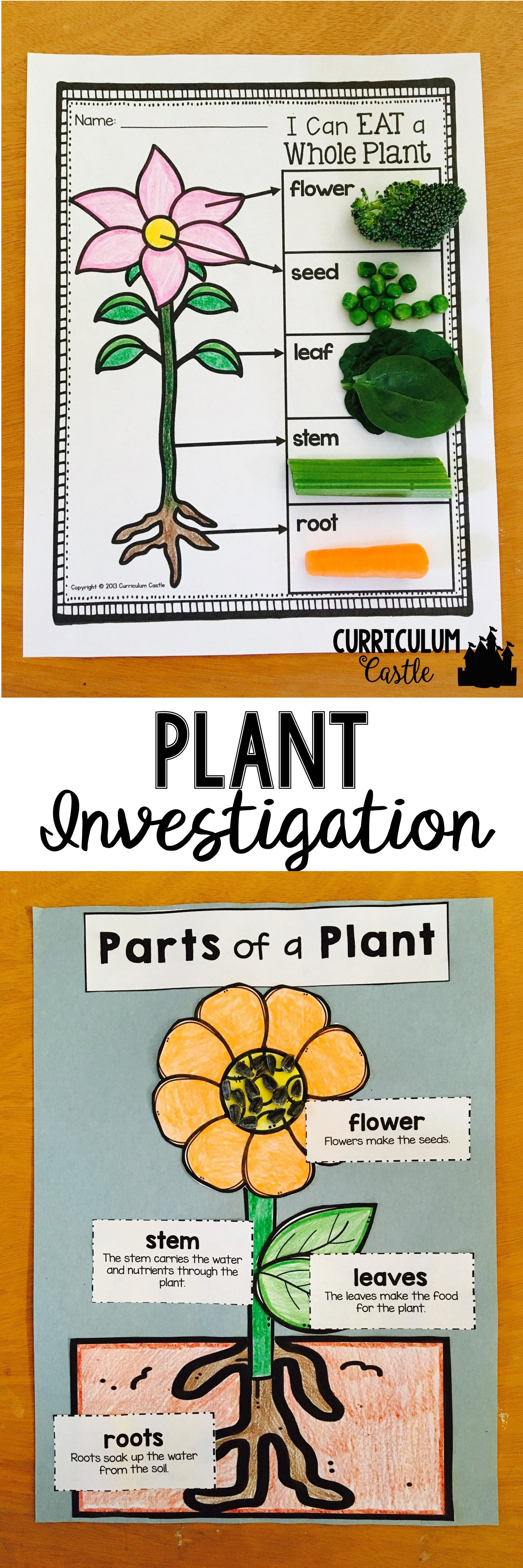 Plant Investigation Unit All About Plants Life Cycle And