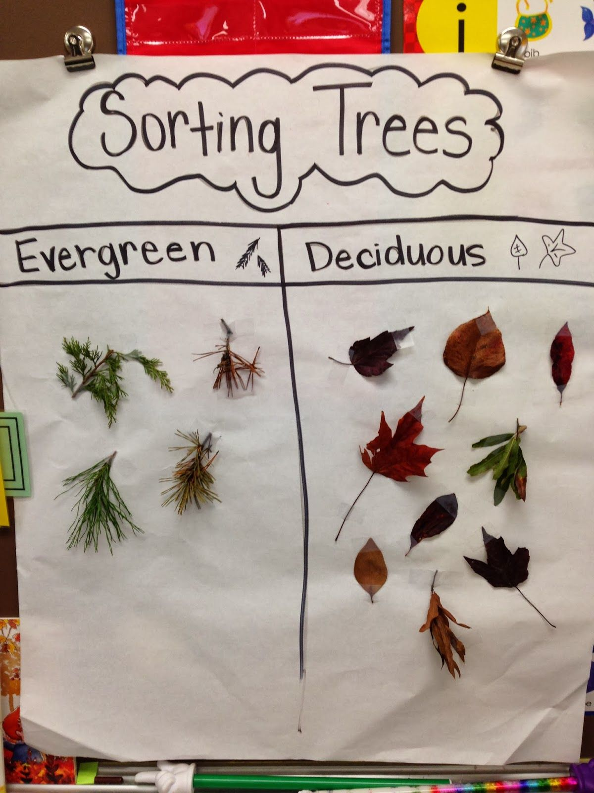 Sorting Trees Chart