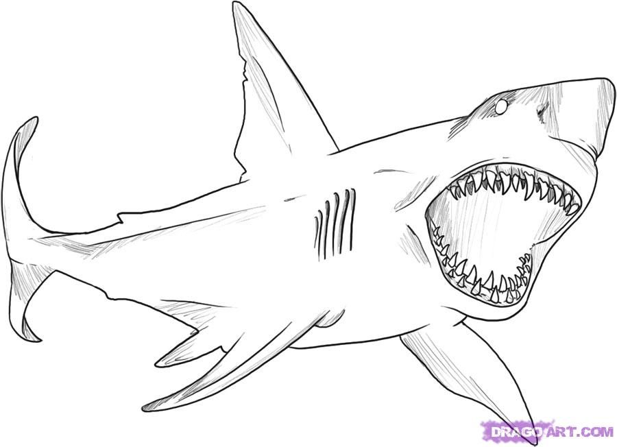 1000 images about shark coloring pages on pinterest sharks