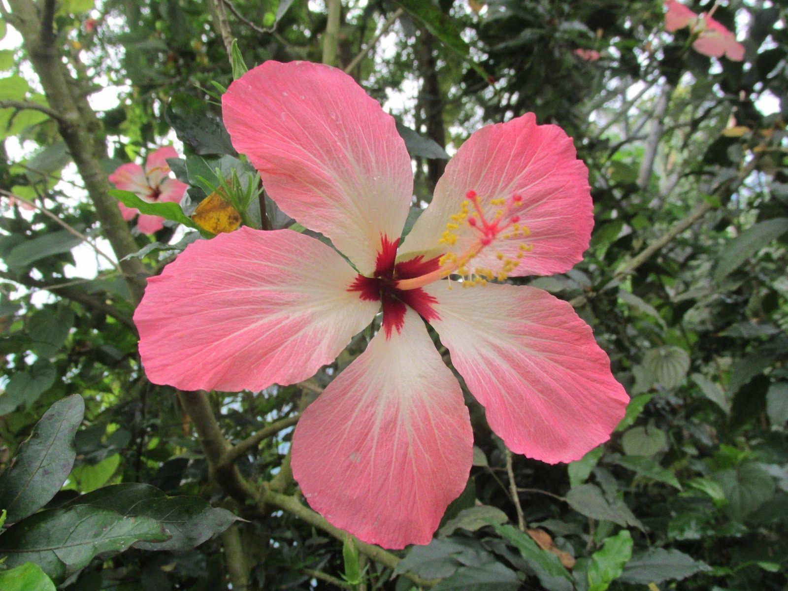 Exotic Rainforest Flowers