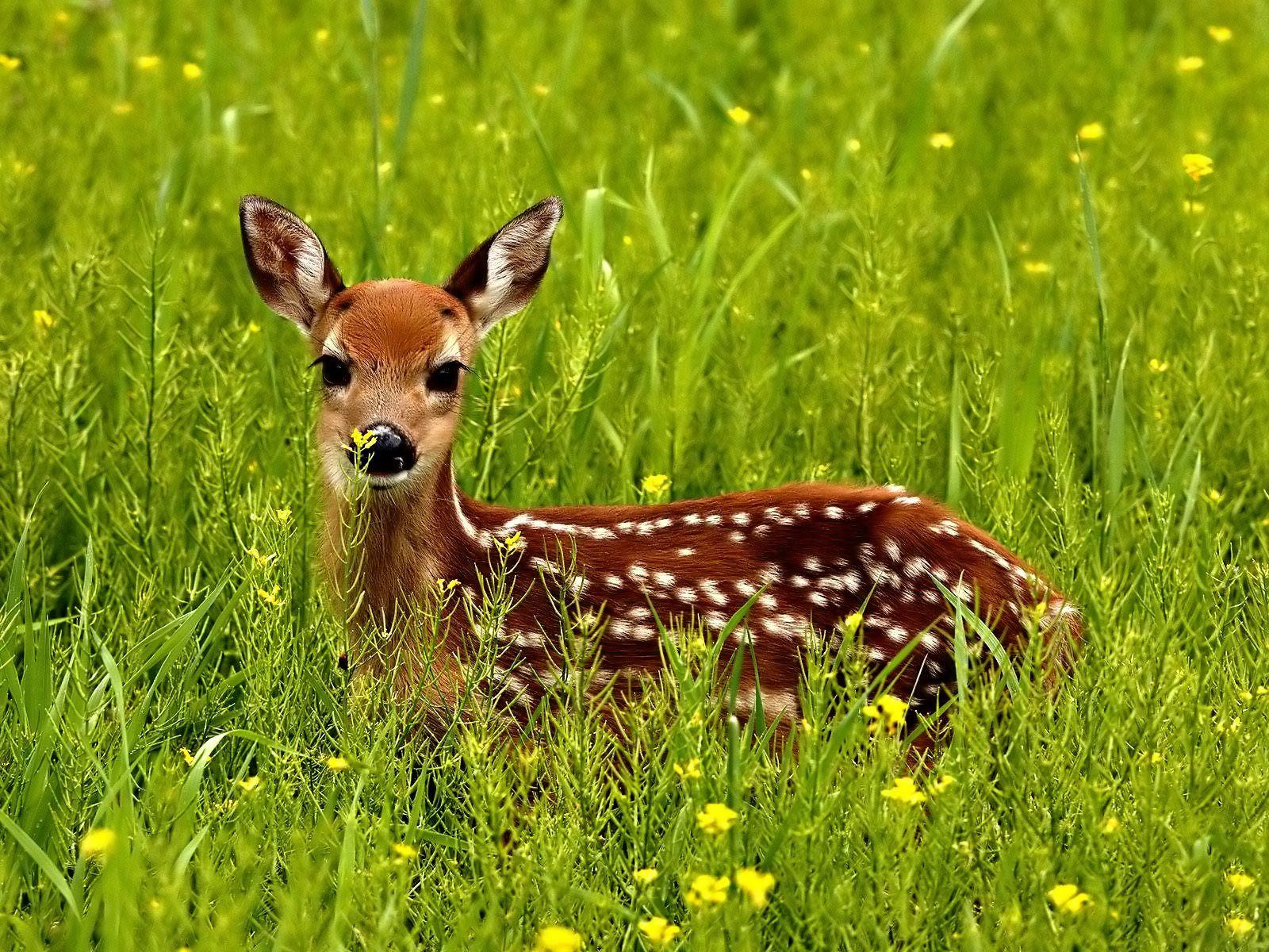 Indian Deer in Lovely Flowers Microsoft Windows 8