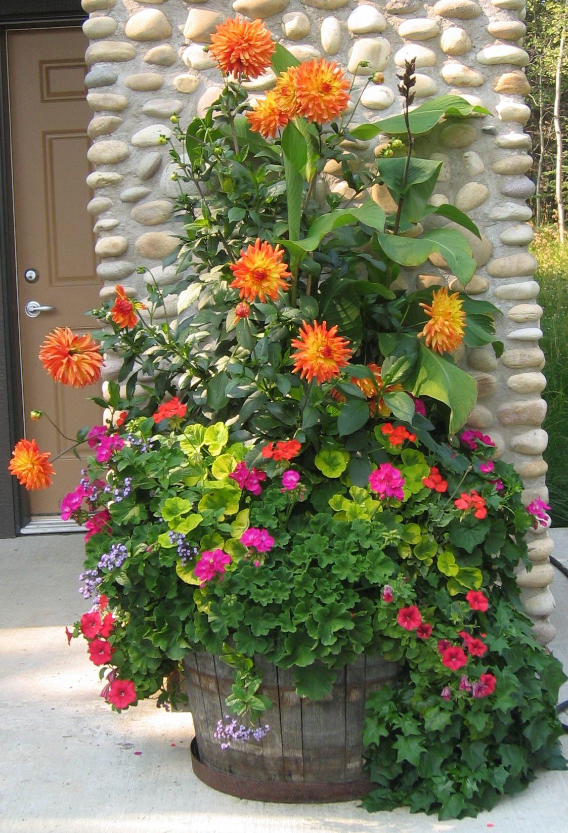 Summer planter with dahlias, geraniums etc. like all the