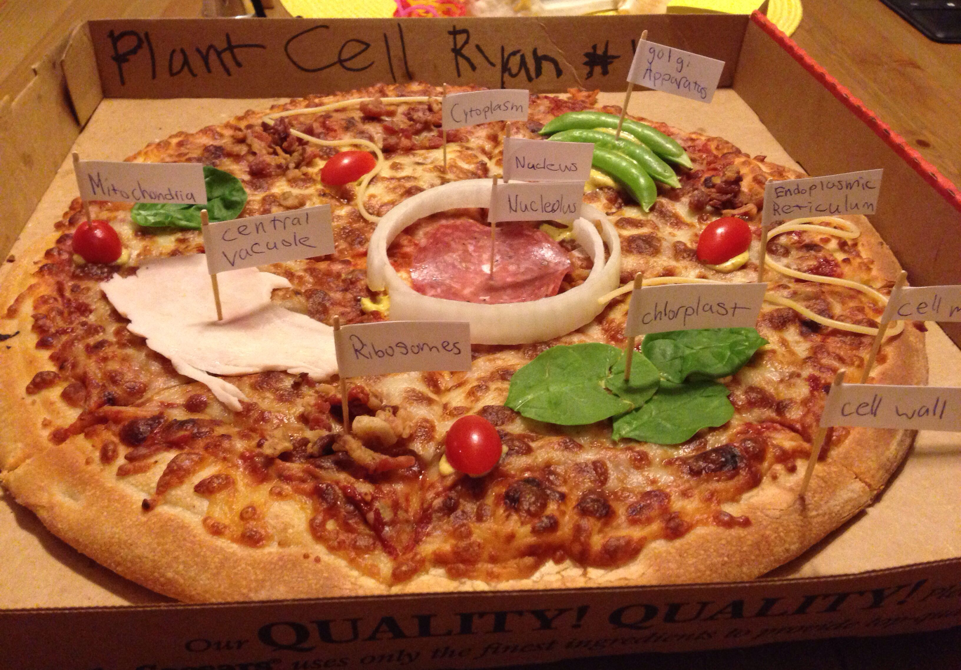 Plant Cell Pizza Model Doing This With An Animal Cell