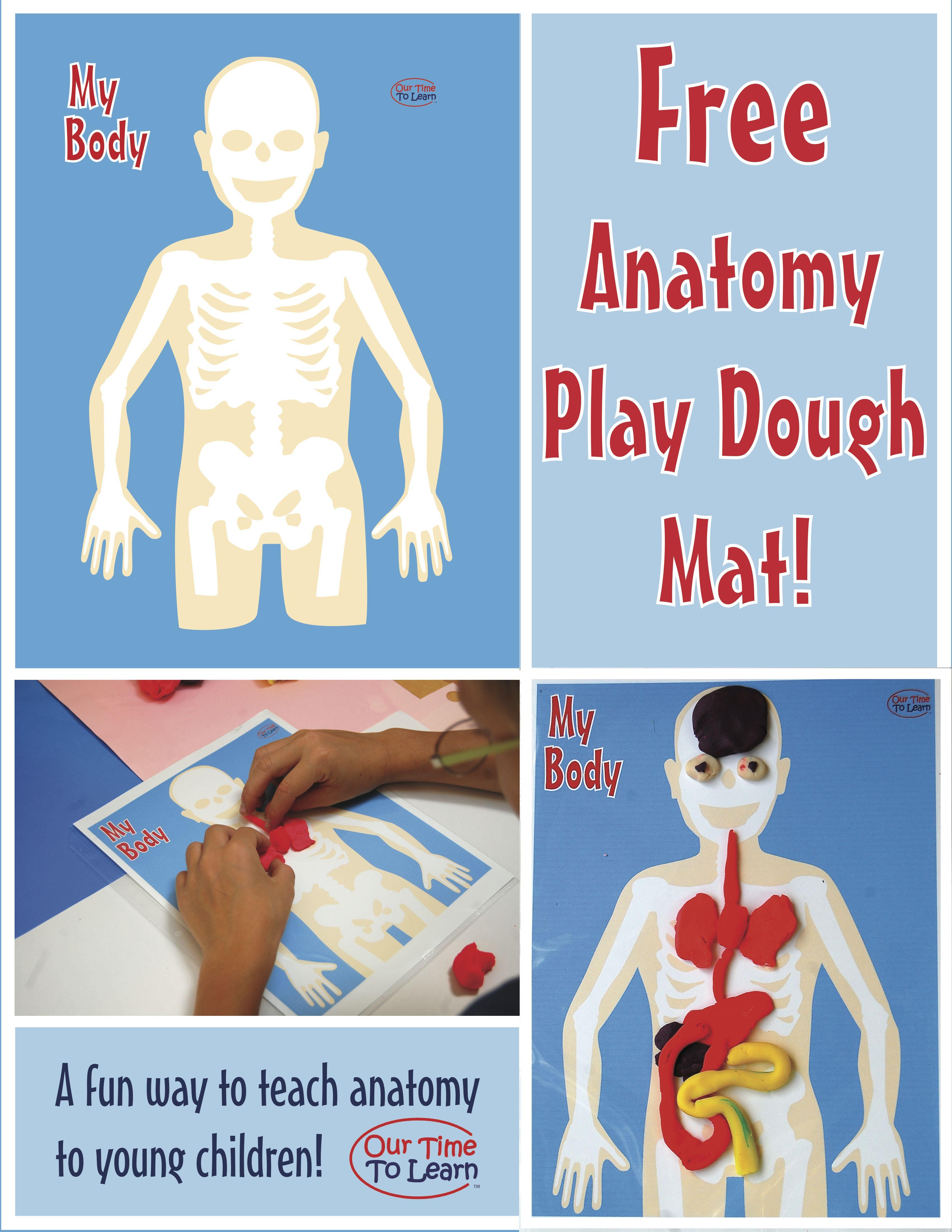Human Body Anatomy Teaching Tool