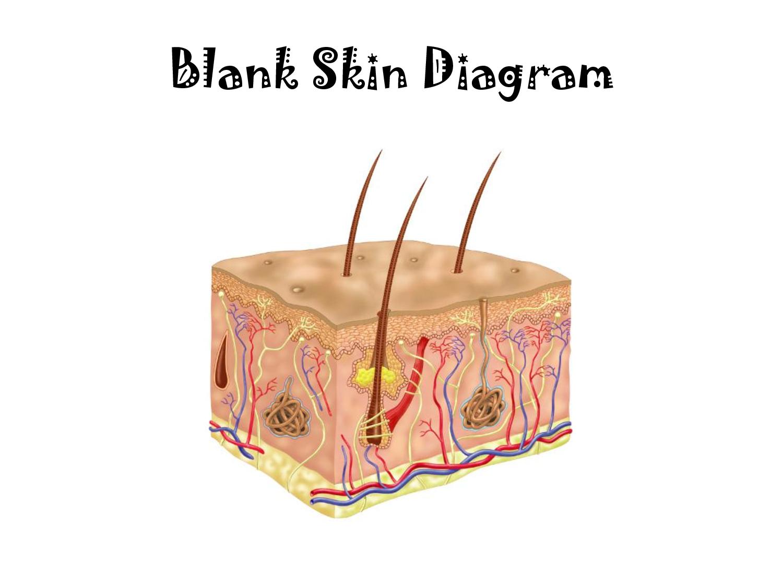 Blank Skin Diagram