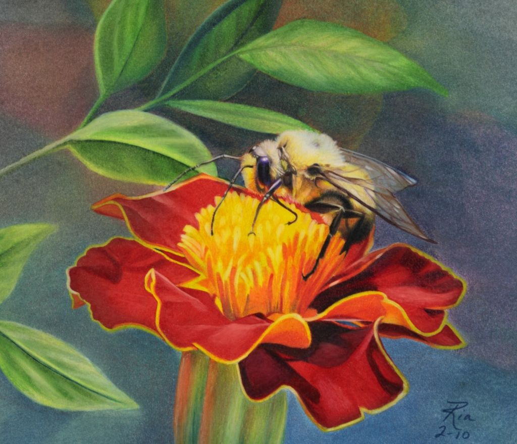 40 Beautiful Flower Drawings and Realistic Color Pencil