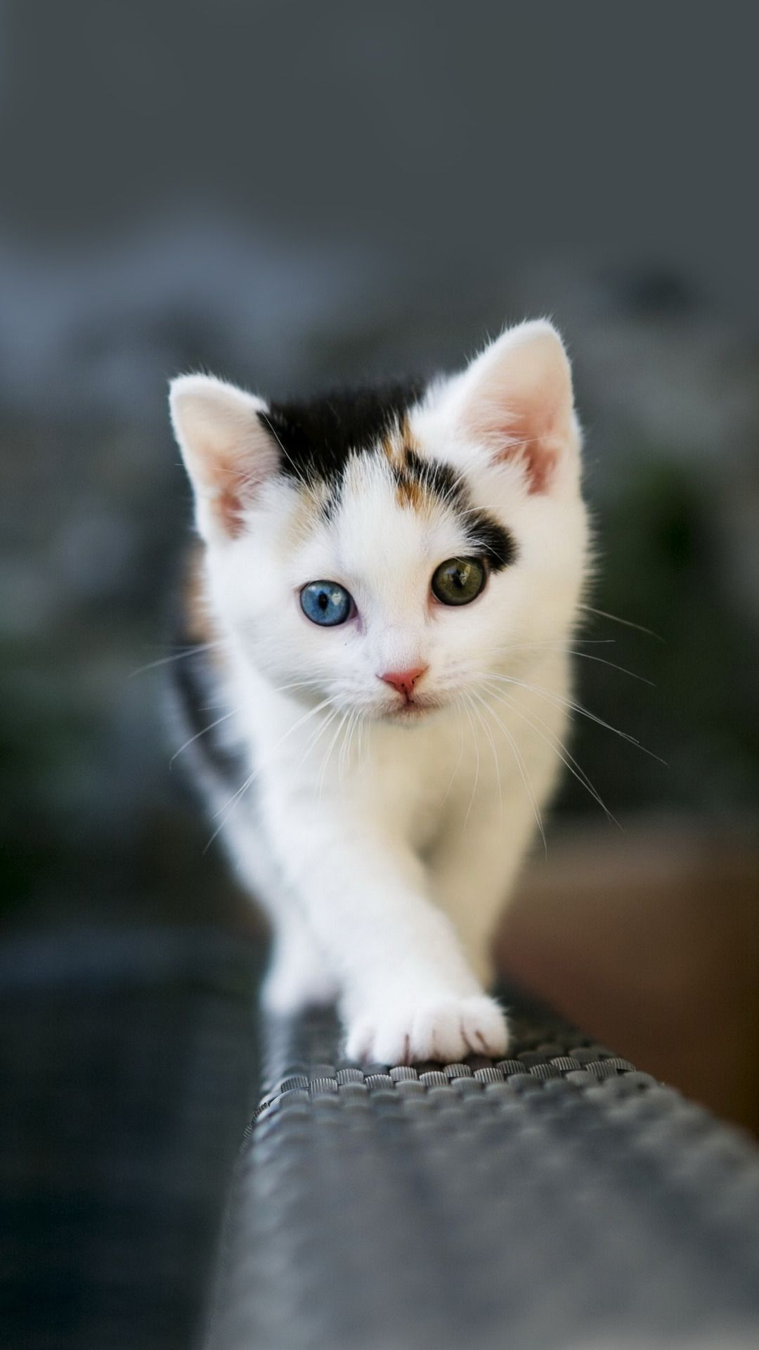 kitten htc one wallpaper | kitty kitty kitty | pinterest
