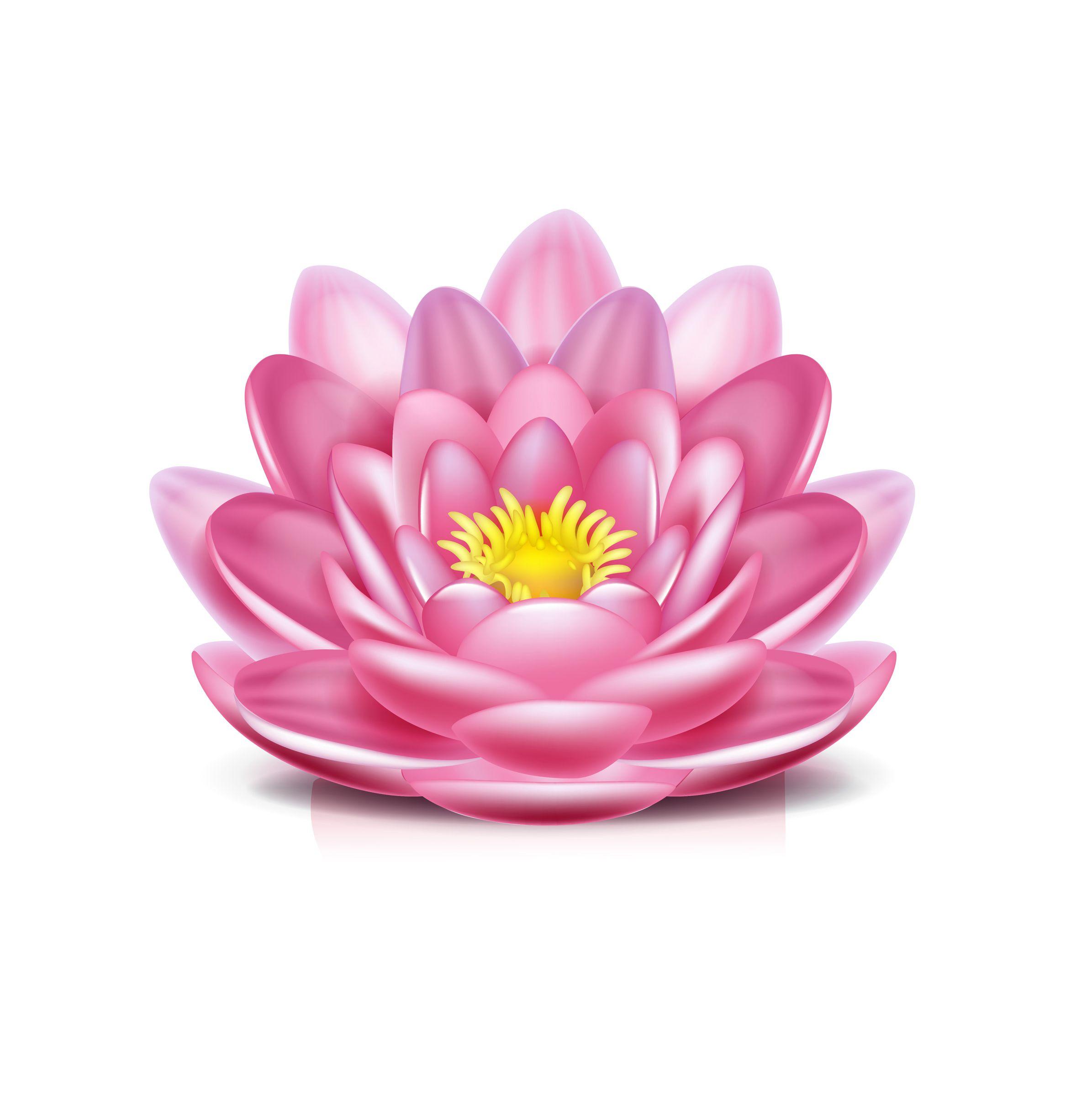 Resultado de imagem para lotus flower My Polyvore Finds
