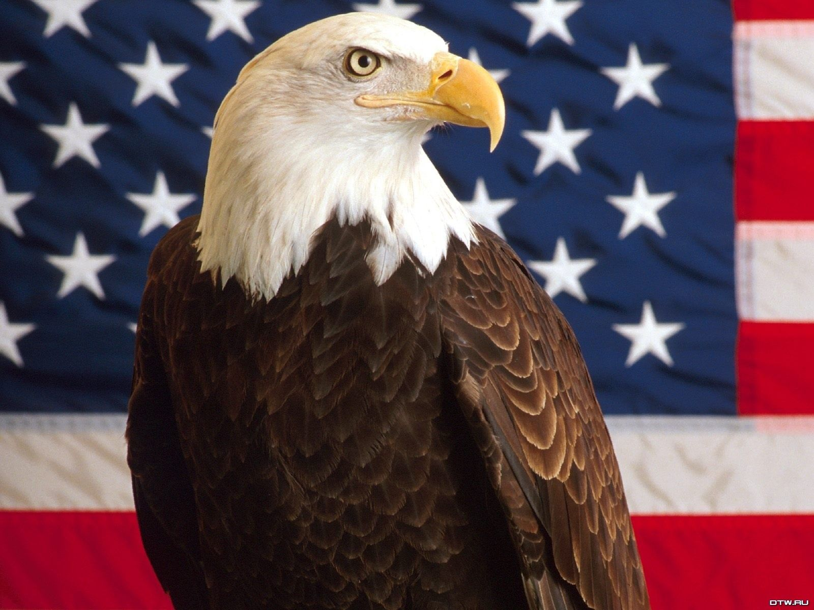 bald eagle pictures USA Patriotic Wallpaper bald