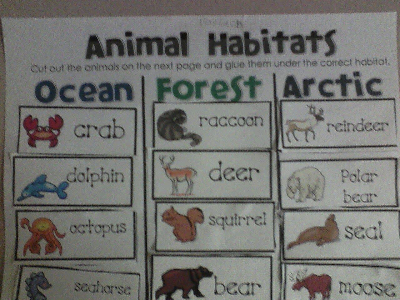 Miss Llewellyn S Kindergarten Animal Habitats Sort