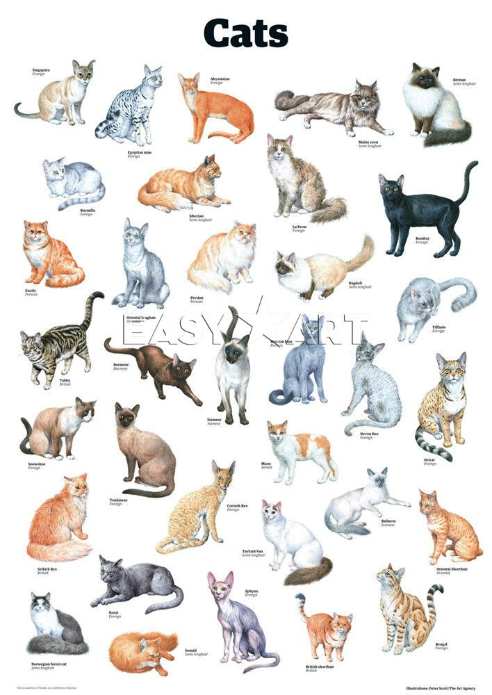 Cats, Guardian Wallchart Prints from CATS