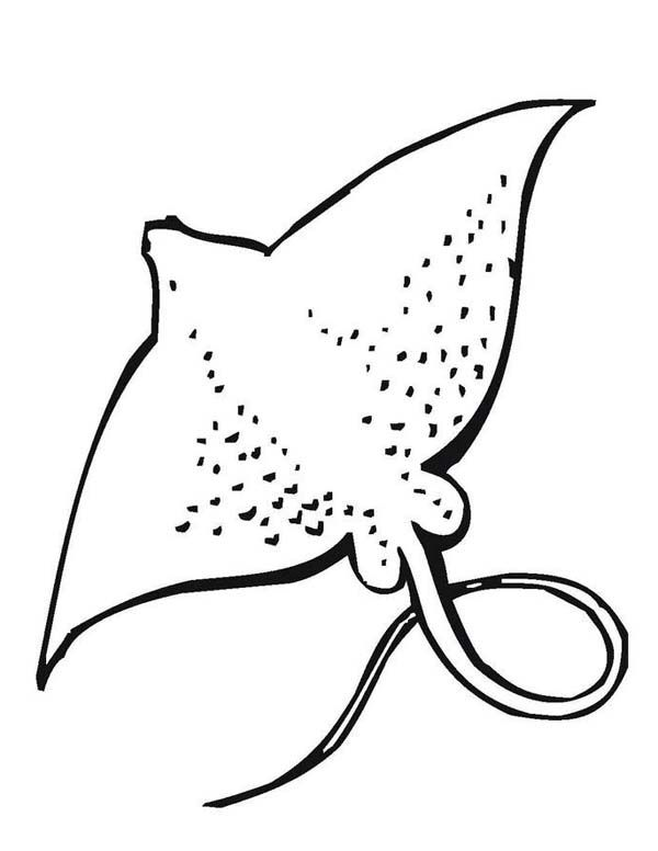 1000 images about sting ray on pinterest stingrays ocean