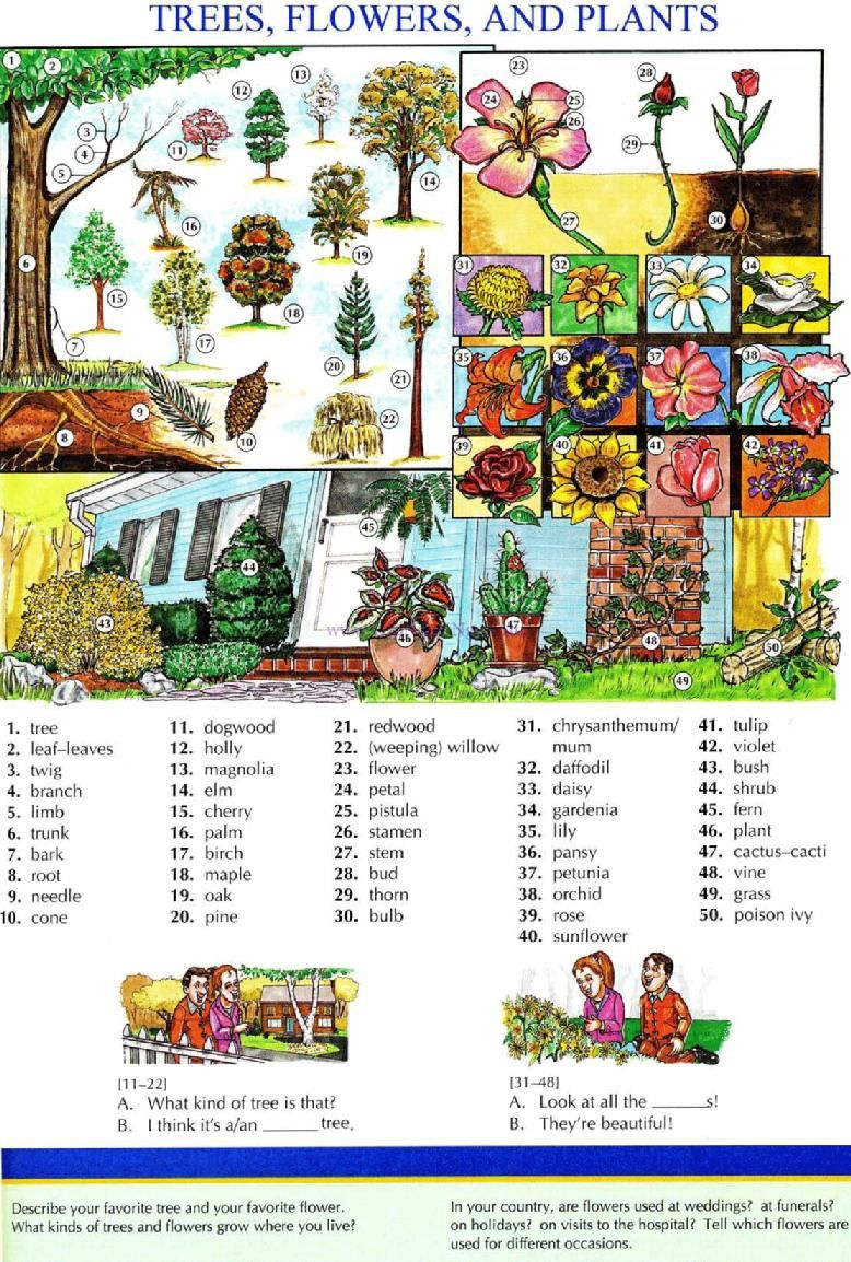 109 TREES, FLOWERS, AND PLANTS Pictures dictionary