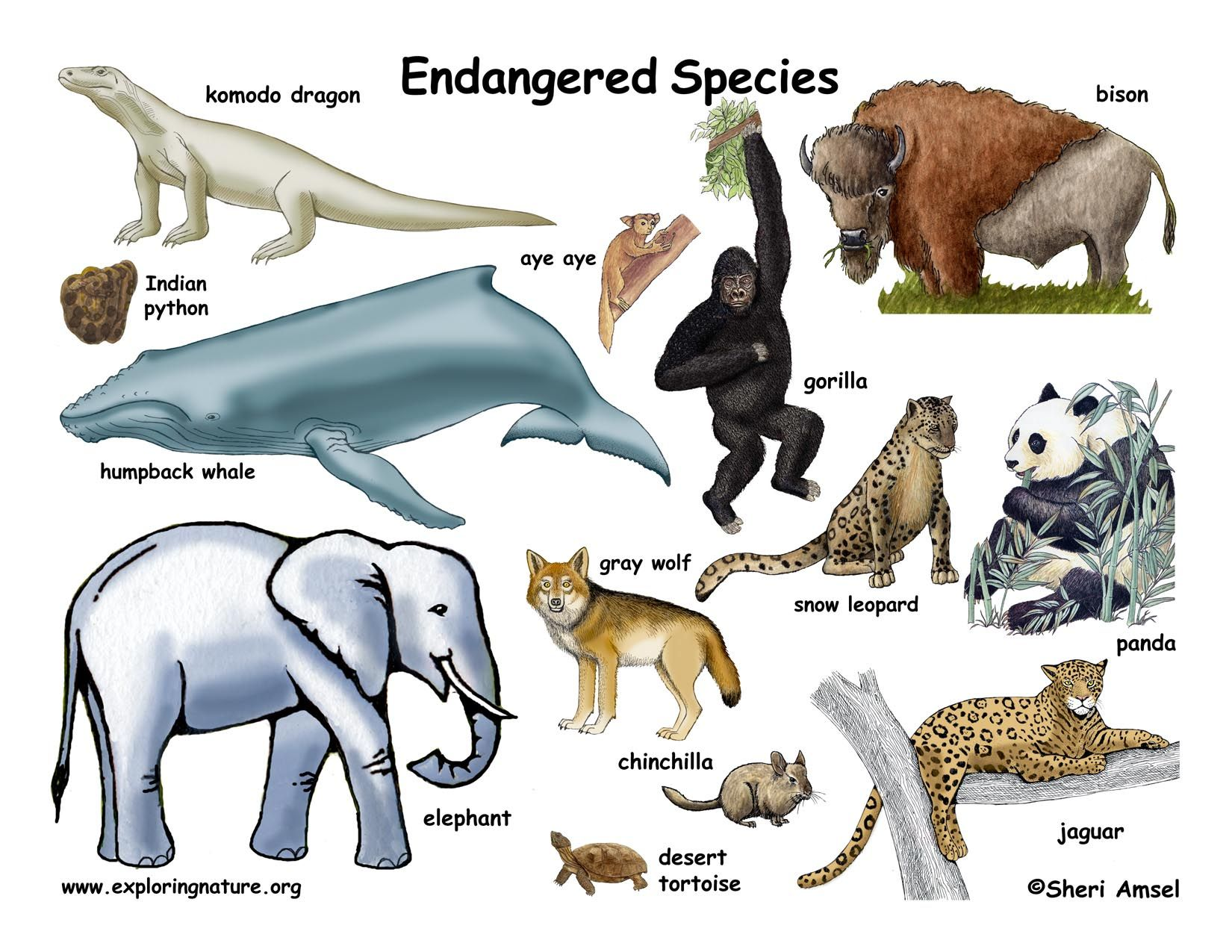 Endangered animals animals Pinterest Animal and
