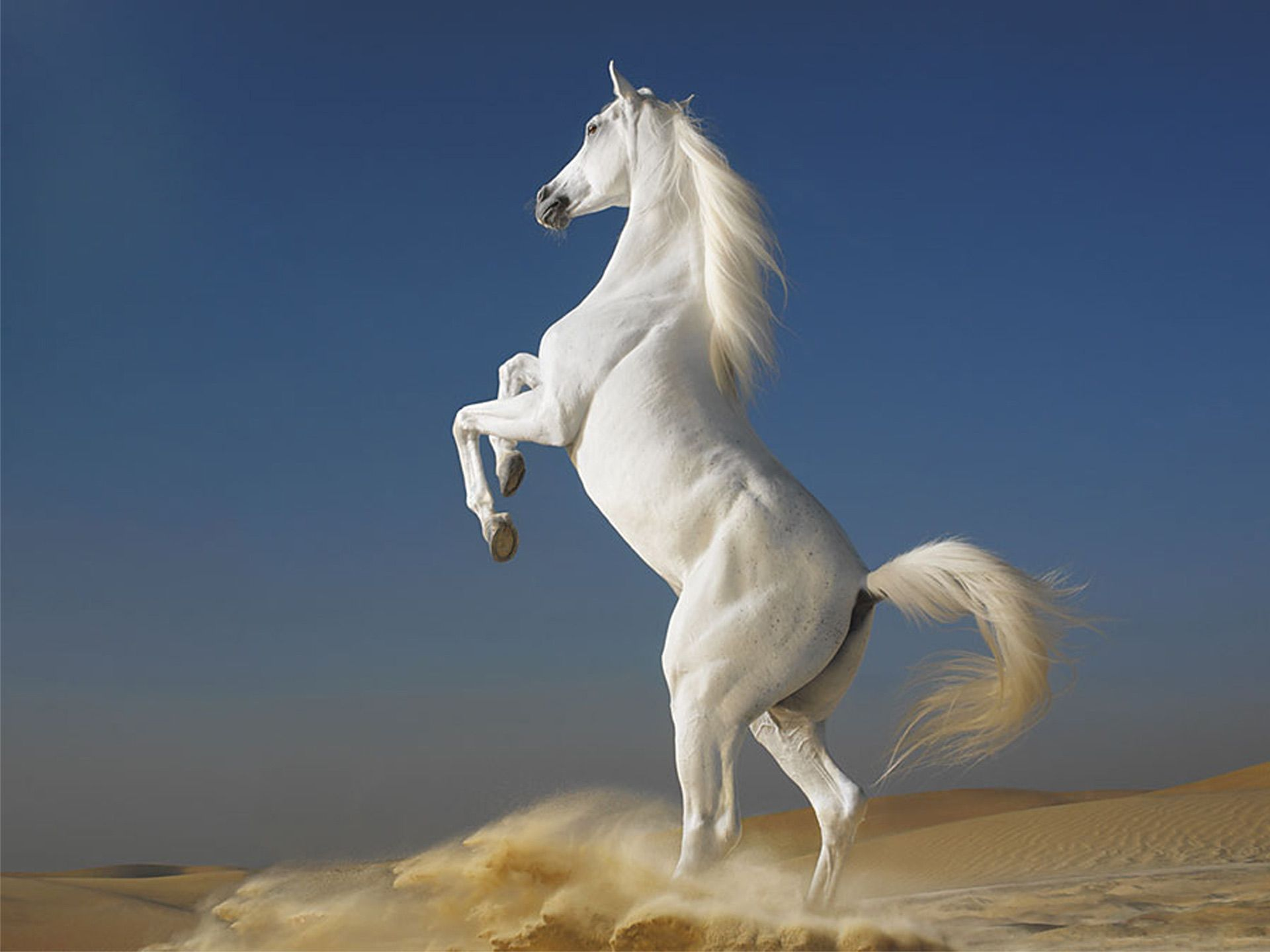 12 best horses images on pinterest | horse wallpaper, horses and
