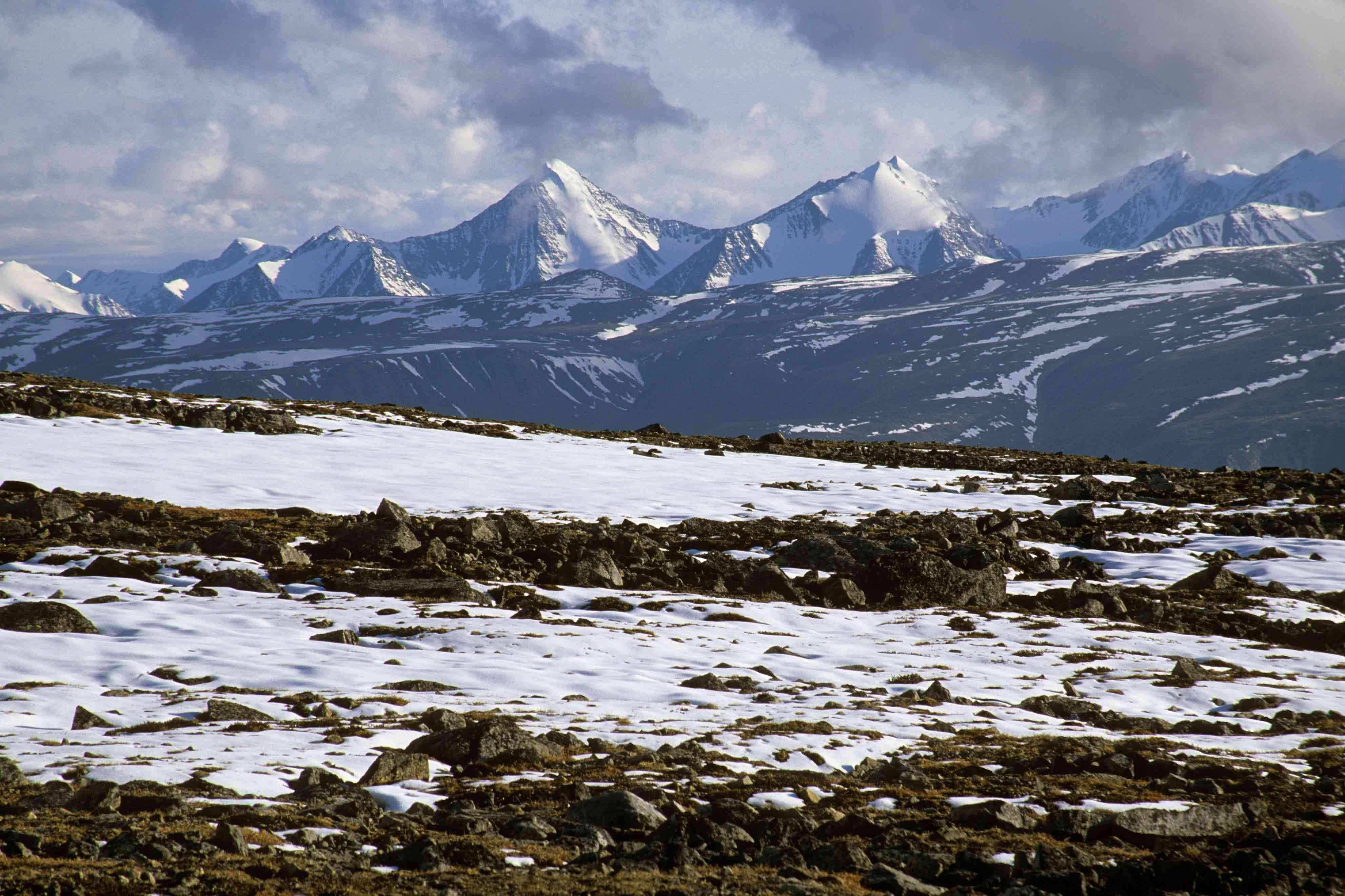 tundra image of a best view of tundra Landscapes