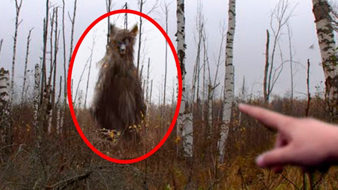 5 Werewolves Caught on Camera & Spotted In Real Life