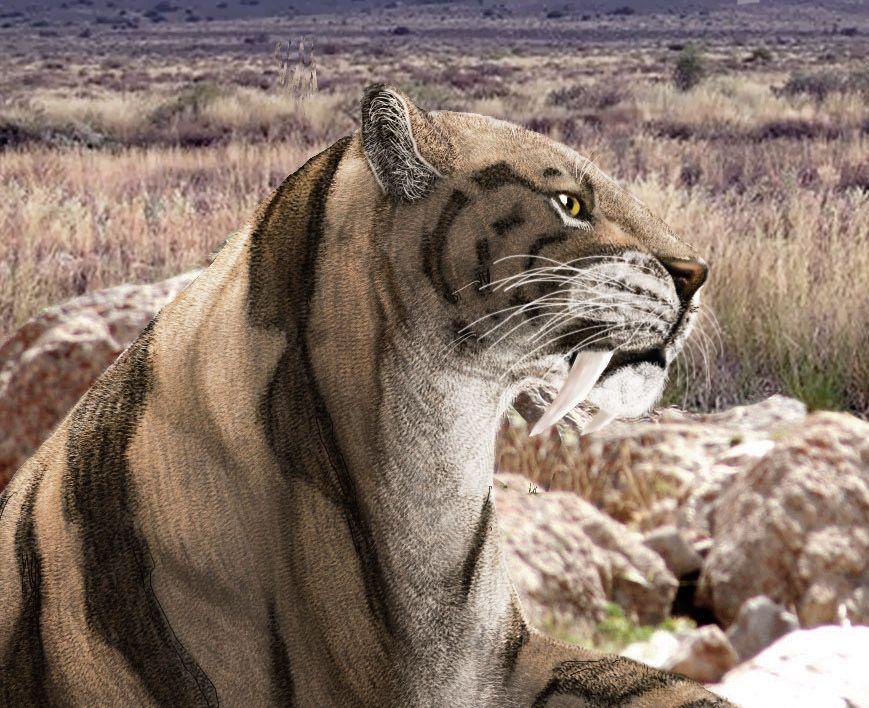 Smilodon fatalis by on deviantART