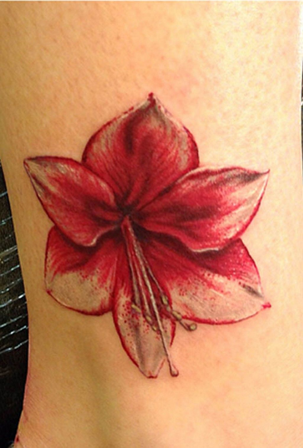 Amaryllis stand for success after a struggle. I want it in