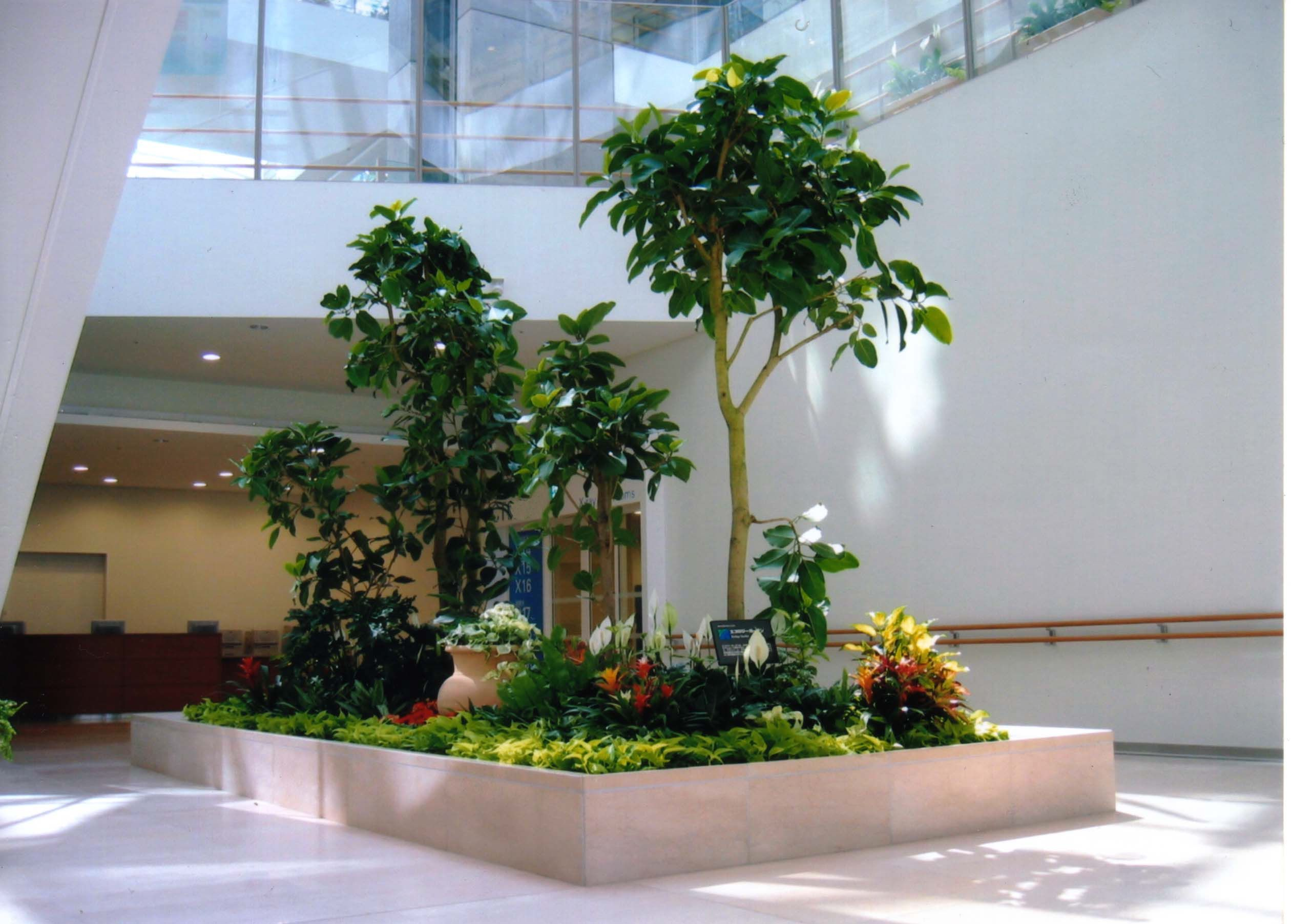 Interior Planter Waltham MA Best Plants for Offices