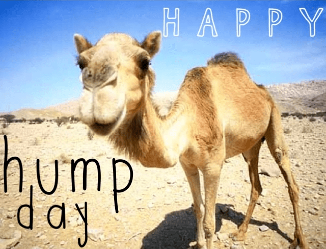 Happy Hump Day quotes quote days of the week wednesday