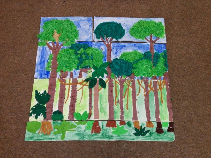Collage rainforest layers. Resources Pinterest