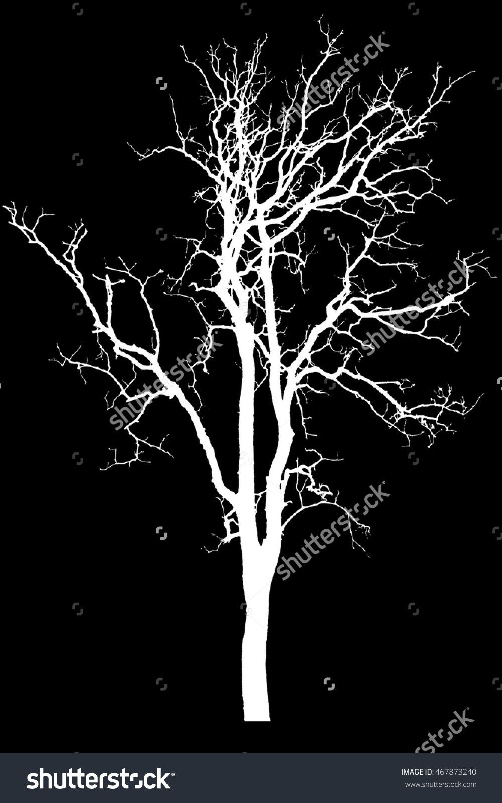 Silhouette Tree Isolated On Black Background With Clipping