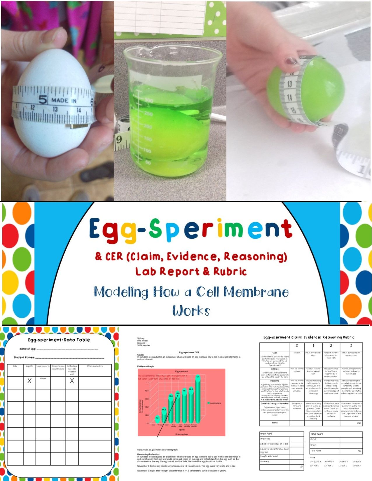 Cell Membrane Eggsperiment Activity Cer Amp Rubric Aligns With Ngss Ms Ls1 2