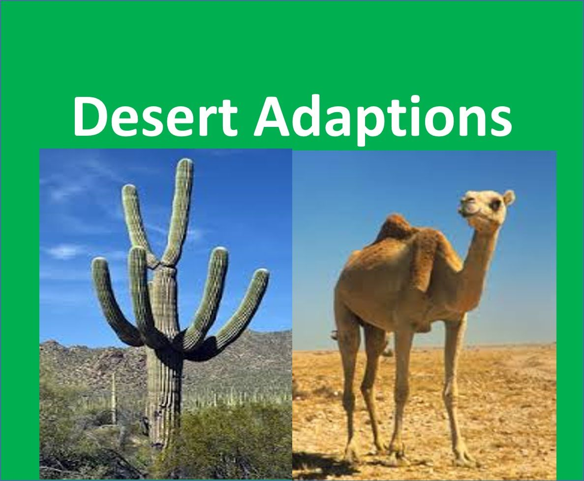 Desert Plants And Animals Adaptations For Kids