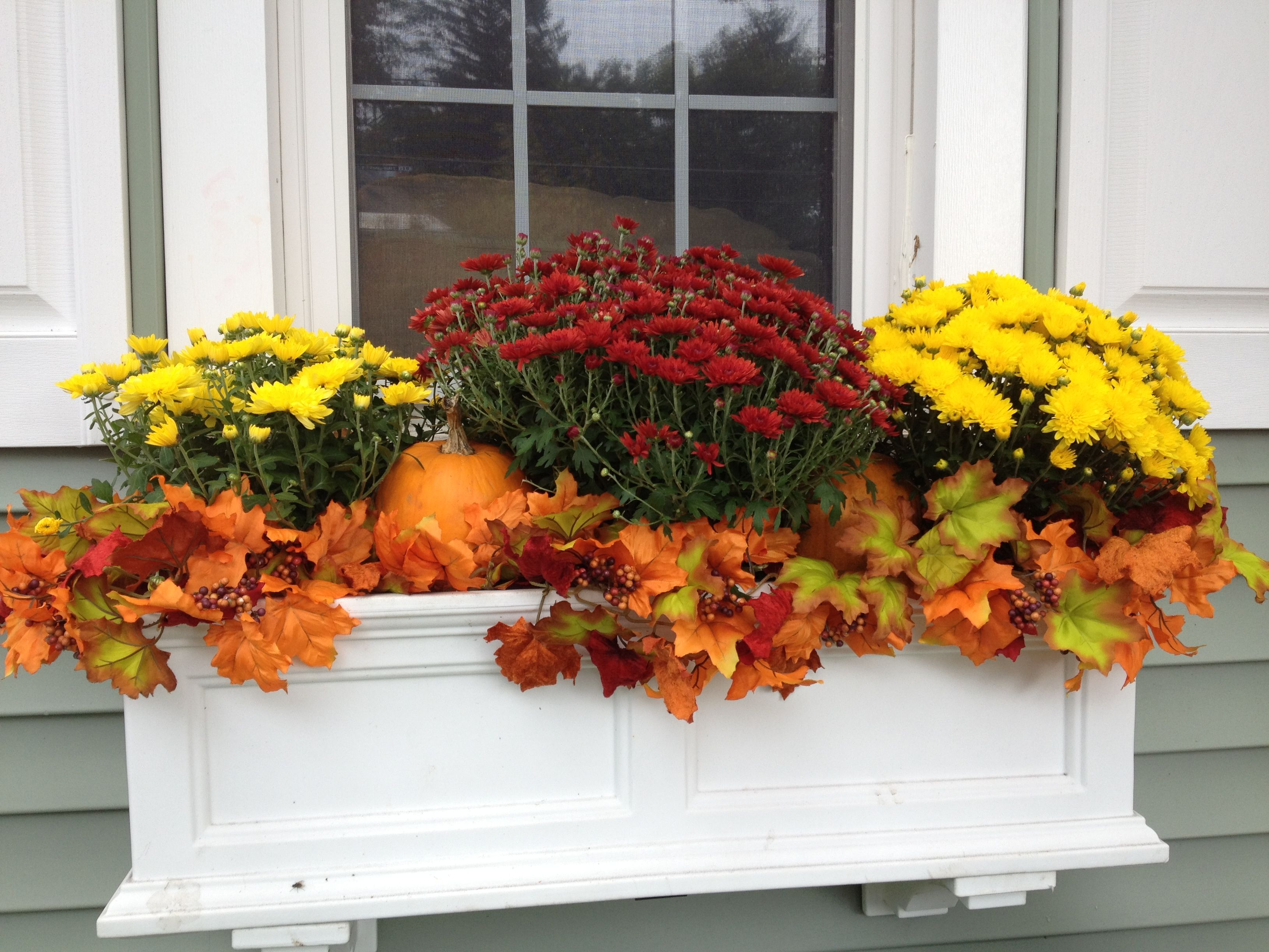 Fall window box. Fall Pinterest Window, Box and Gardens