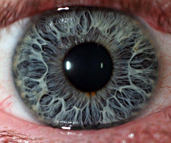 human eye microscope ile ilgili görsel sonucu