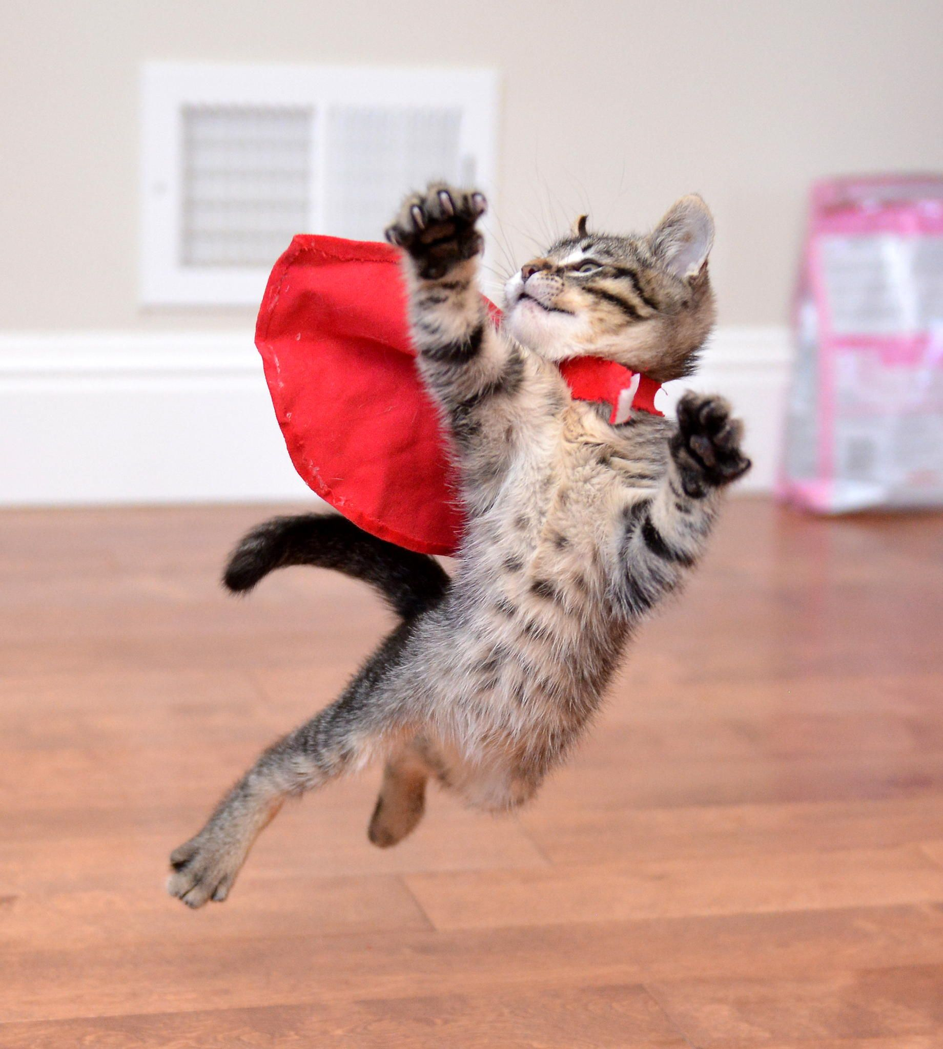 Adorable cats who are excited about Christmas Trees Cat
