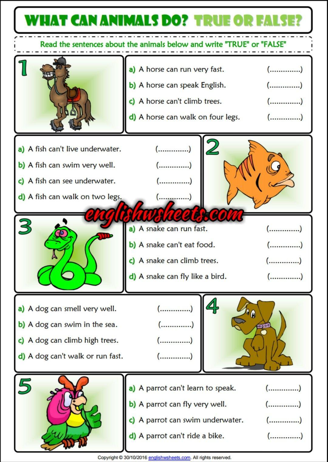 What Can Animals Do True Or False Esl Printable Grammar