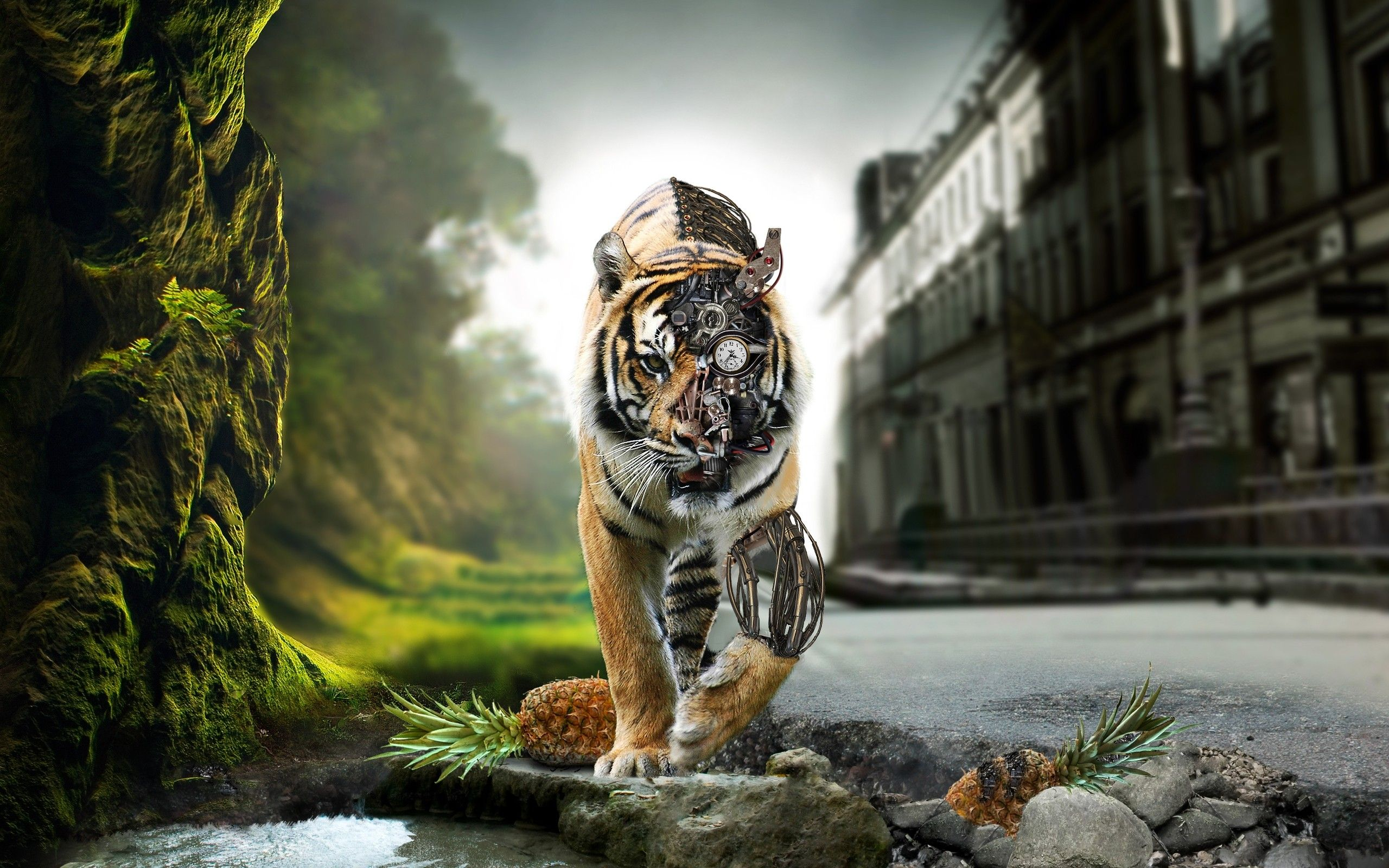the amazing tigers hd wallpapers & pictures at http://www