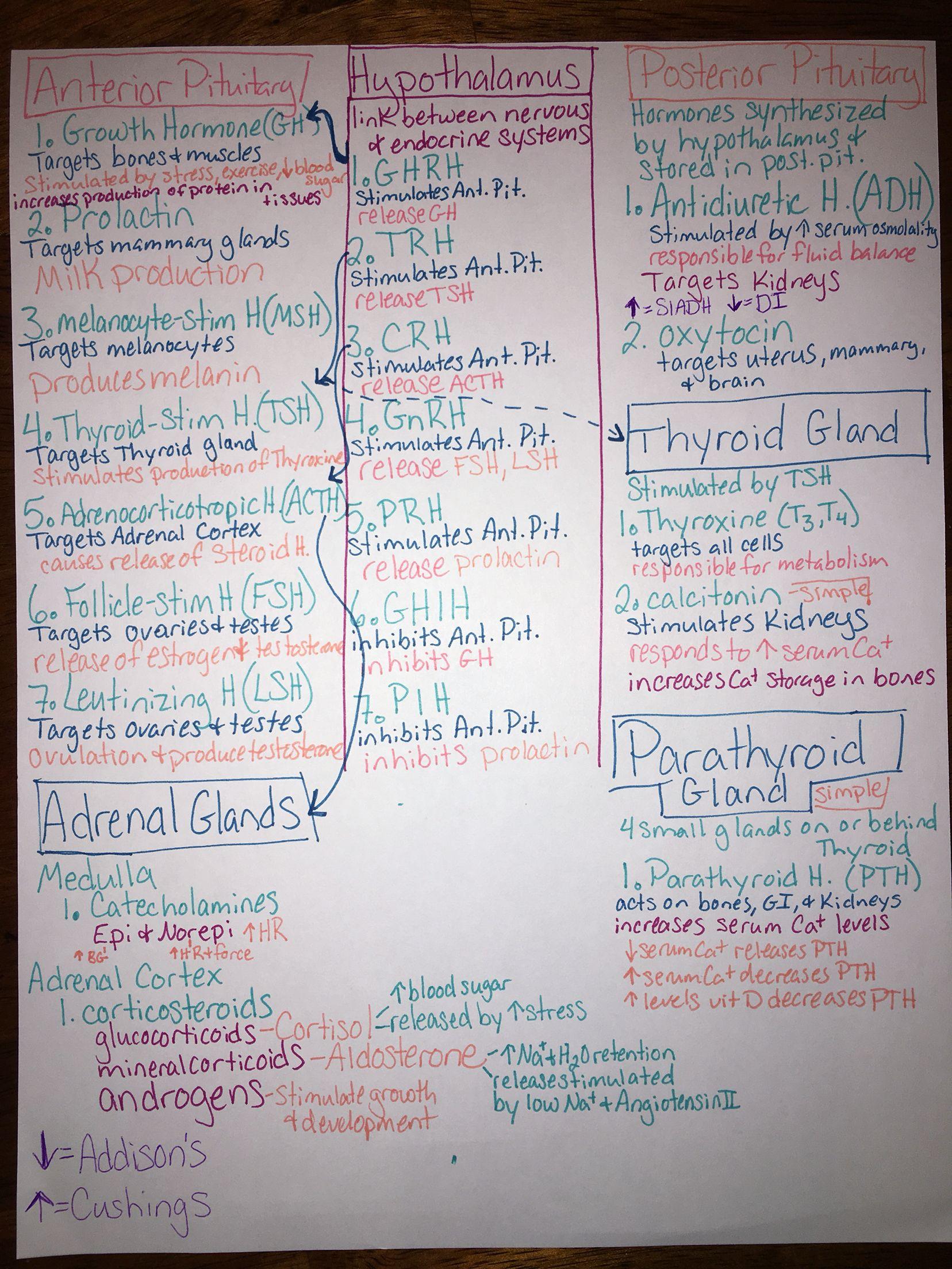 Endocrine Hormone Map Nursing School