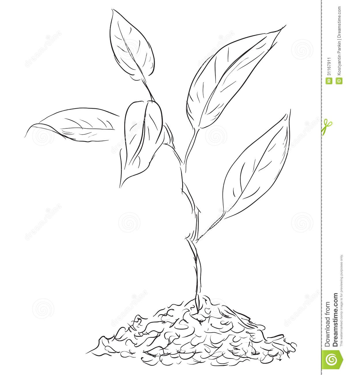 Plant Sprout Drawing
