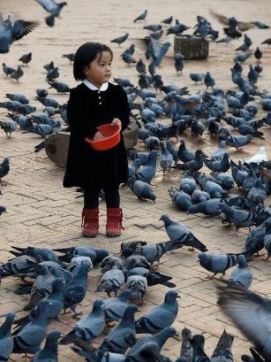 Image result for pigeon in nepal kids feeding