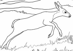 mule deer colouring pages and kids org on pinterest